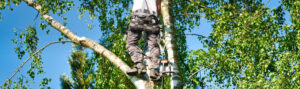 houston tree trimmers